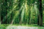 Gỗ tự nhiên là gì - Ưu, nhược điểm của gỗ tự nhiên