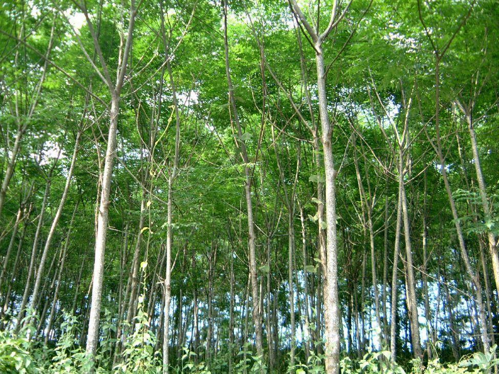 Kết quả hình ảnh cho cây
